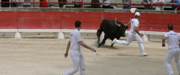 Corsa camarghese, la corrida dove vince il toro